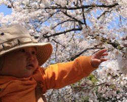 You Wanna Learn Japanese Like a Baby?
