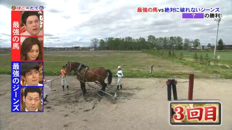 Horse v Jeans 1