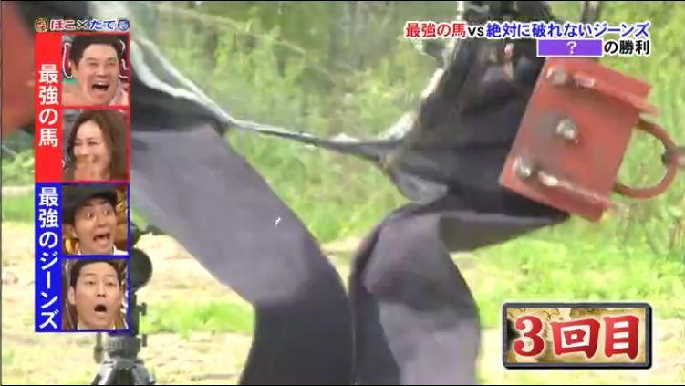 Horse v Jeans 5
