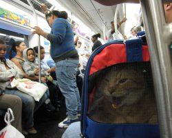 ニューヨーク地下鉄を最高な気分で乗る9つの方法