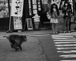 Failed Your Japanese New Year's Resolution Already?