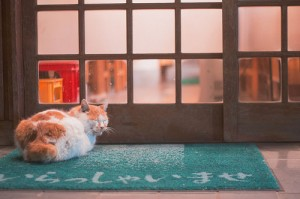 The Meaning Behind The Japanese Neko (Cat) 1