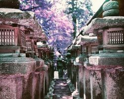Everything I Learned on my Continuing Japanese  Journey